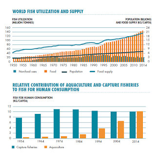 Fbulas sustentveis one of the key messages from the publication sofia 2016 was that world aquaculture production continues to grow and now provides half of all fish for human sciox Gallery