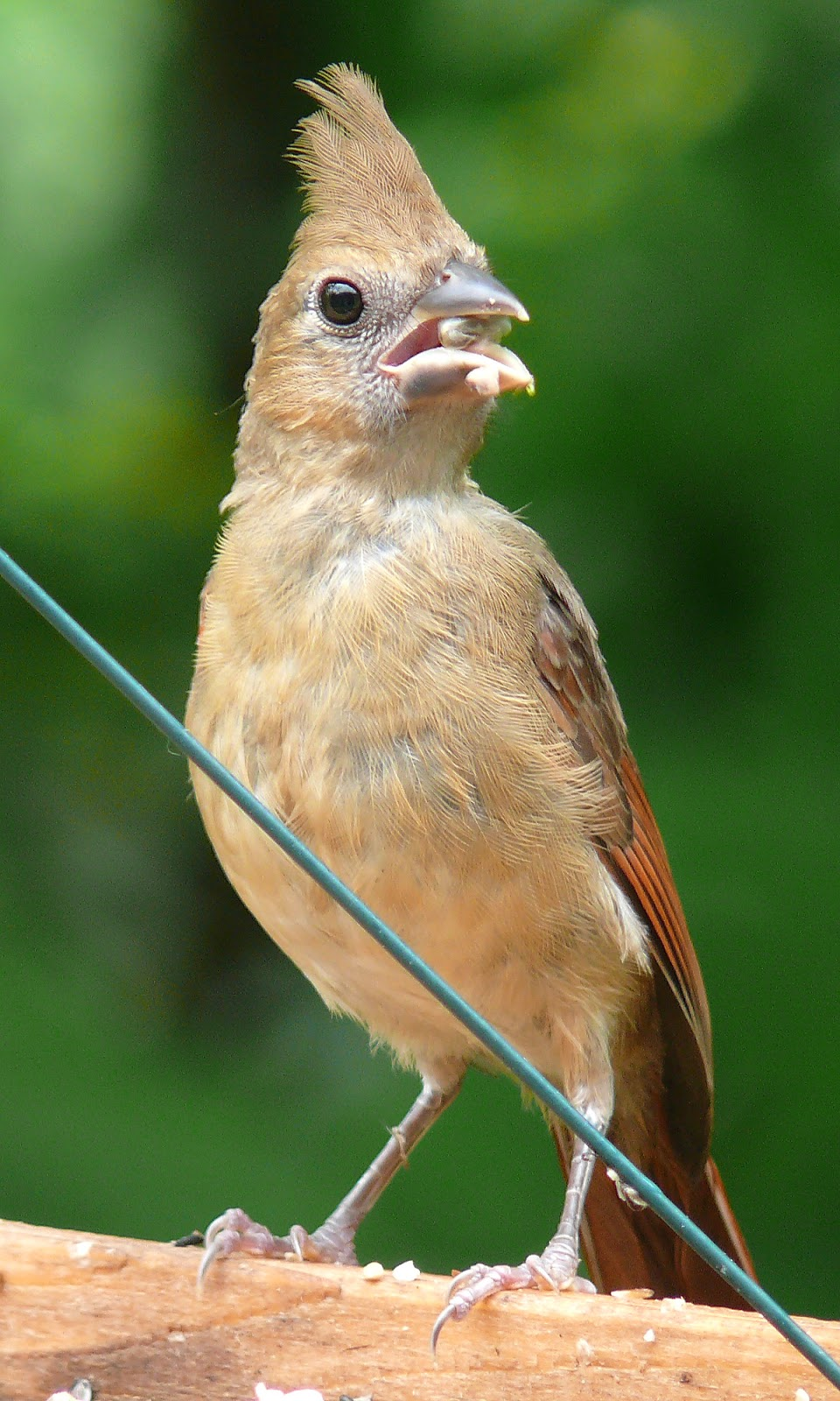 canada hobby store with Baby Cardinal Having Face Only Mother on Promotion baby Reborn Kits Promotion together with 321298819204 together with Slots besides How To Build An Ar 15 Beginners Guide Part One in addition Sales Associate Cover Letter S le.