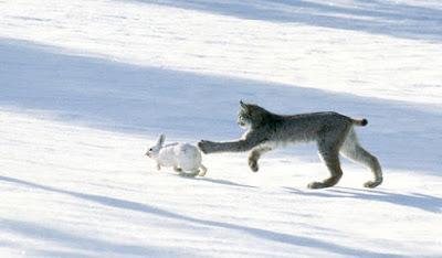 Jual Canada Lynx,  Harga Canada Lynx,  Toko Canada Lynx,  Diskon Canada Lynx,  Beli Canada Lynx,  Review Canada Lynx,  Promo Canada Lynx,  Spesifikasi Canada Lynx,  Canada Lynx Murah,  Canada Lynx Asli,  Canada Lynx Original,  Canada Lynx Jakarta,  Jenis Canada Lynx,  Budidaya Canada Lynx,  Peternak Canada Lynx,  Cara Merawat Canada Lynx,  Tips Merawat Canada Lynx,  Bagaimana cara merawat Canada Lynx,  Bagaimana mengobati Canada Lynx,  Ciri-Ciri Hamil Canada Lynx,  Kandang Canada Lynx,  Ternak Canada Lynx,  Makanan Canada Lynx,  Canada Lynx Termahal,  Adopsi Canada Lynx,  Jual Cepat Canada Lynx,  Canada Lynx  Jakarta,  Canada Lynx  Bandung,  Canada Lynx  Medan,  Canada Lynx  Bali,  Canada Lynx  Makassar,  Canada Lynx  Jambi,  Canada Lynx  Pekanbaru,  Canada Lynx  Palembang,  Canada Lynx  Sumatera,  Canada Lynx  Langsa,  Canada Lynx  Lhokseumawe,  Canada Lynx  Meulaboh,  Canada Lynx  Sabang,  Canada Lynx  Subulussalam,  Canada Lynx  Denpasar,  Canada Lynx  Pangkalpinang,  Canada Lynx  Cilegon,  Canada Lynx  Serang,  Canada Lynx  Tangerang Selatan,  Canada Lynx  Tangerang,  Canada Lynx  Bengkulu,  Canada Lynx  Gorontalo,  Canada Lynx  hewan indonesia,  Canada Lynx  jurnal kedokteran hewan,  Canada Lynx  dokter hewan 24 jam,  Canada Lynx  permainan hewan melahirkan,  Canada Lynx  rs hewan,  Canada Lynx  hewan qurban,  Canada Lynx  kambing kurban,  Canada Lynx  hewan terbesar di dunia,  Canada Lynx  hewan kurban,  Canada Lynx  ciri ciri hewan vertebrata,  Canada Lynx  ciri ciri hewan,  Canada Lynx  ciri ciri hewan laut,  Canada Lynx  hewan yang terdiri dari satu sel disebut,  Canada Lynx  hewan dari h,  Canada Lynx  nama untuk hewan peliharaan,  Canada Lynx  hewan,  Canada Lynx  games hewan peliharaan,  Canada Lynx  dokter hewan murah,  Canada Lynx  klinik hewan jakarta,  Canada Lynx  dokter hewan di jakarta,  Canada Lynx  video hewan hewan,  Canada Lynx  dunia hewan,  Canada Lynx  kedokteran hewan,  Canada Lynx  dokter hewan 24 jam jakarta,  Canada Lynx  klinik dokter 