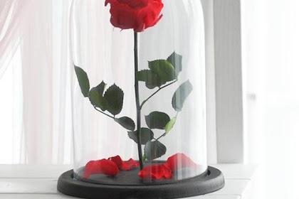 Tips Membuat Preserved Flower dengan Mudah