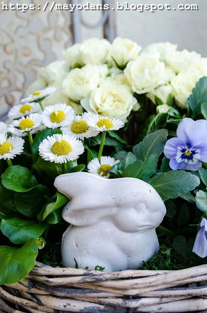 Blumentopf im Frühling