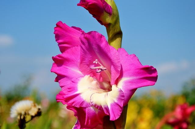 hoa dơn đẹp nhất 1