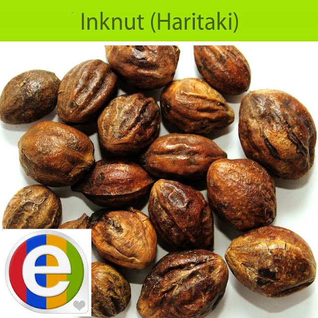 10 Dried whole Haritaki-Terminalia Chebula Black Myrobalan,Chebulic Myrobalan-Harde SEEDS