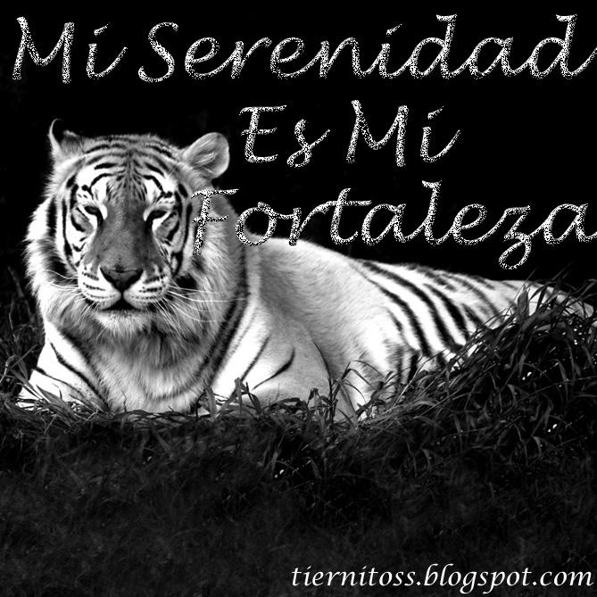 Mundo Animal Frases Celebres De Tigres