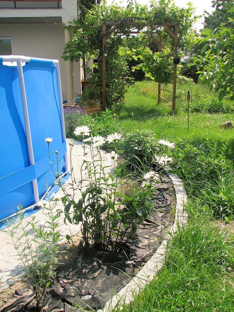 patio z kostki brukowej, ogród przydomowy