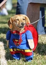 Perro super man