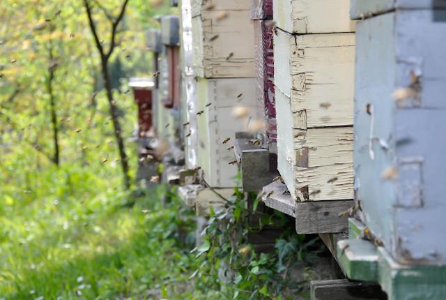 Οι κουβέντες ενός παλιού μελισσοκόμου: Η μελισσοκομία ως επάγγελμα και ως απασχόληση