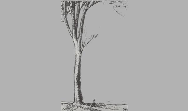 Gedichte Und Zitate Für Alle Gedichte Zum Thema Baum 2