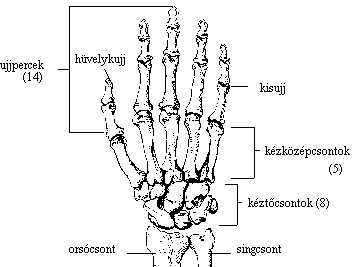 miért fáj a köröm és a kéz ízületei)