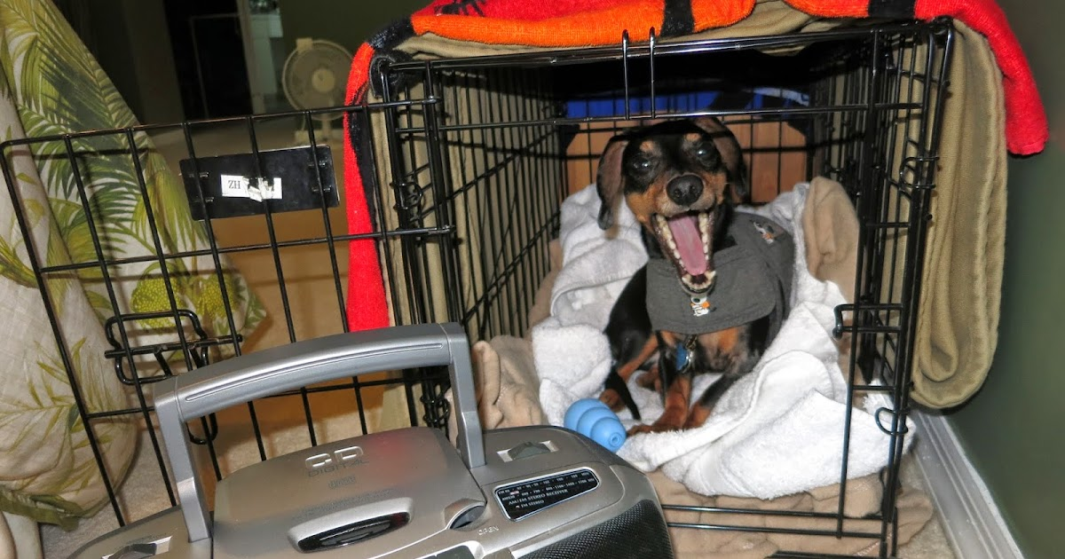 Sabal Chase Animal Clinic Pets And Fireworks