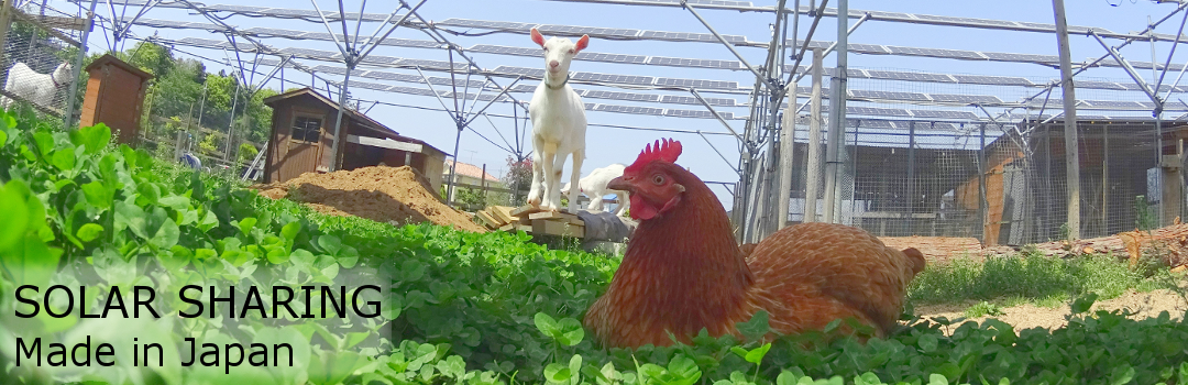 Solar Sharing - Solar panels, chickens and goats in Tsukuba, Japan