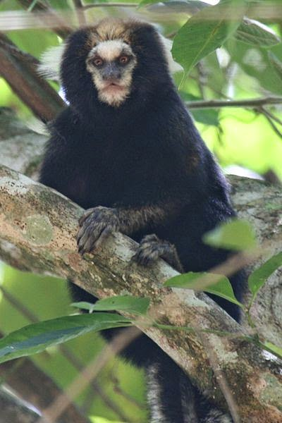 شرح تفصيلى لانواع القرود بالصور والفديو
