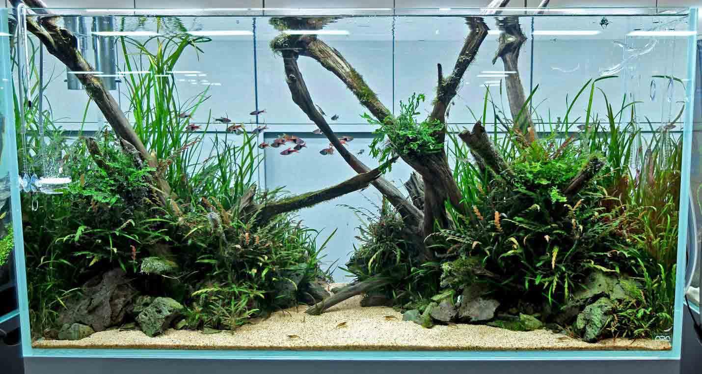 70+ Inspirasi Aquascape, Dekorasi Cantik Aquarium Masa ...