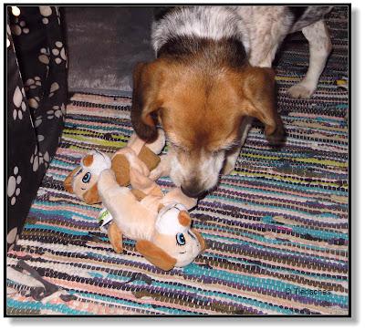tierische Überraschung für Hunde