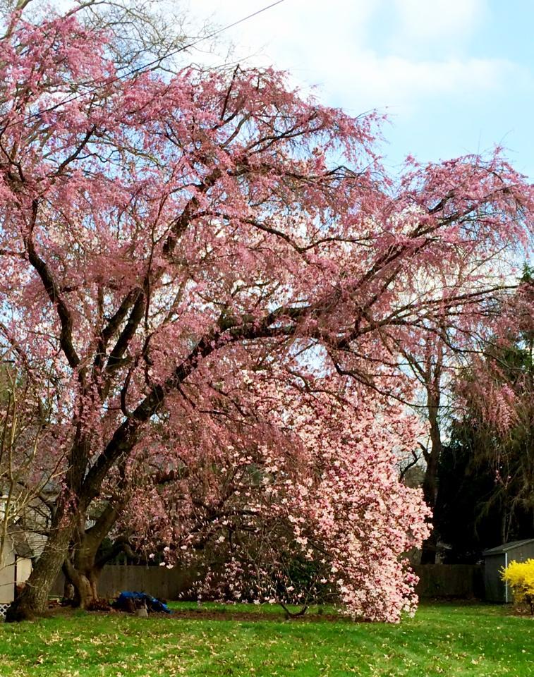 Pohon tumbuh di musim semi
