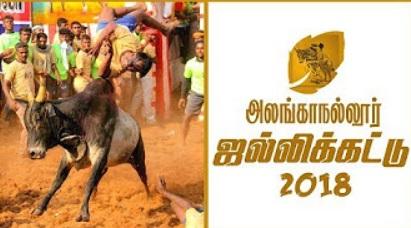 Alanganallur Jallikattu 2018 | IBC Tamil Tv
