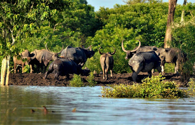 Supreme Court Bans Mining Along Kaziranga National Park