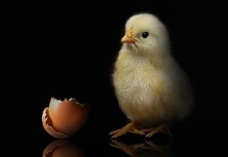 Polemik perdebatan lebih dulu mana ayam atau telur. Mengatasi debat kusir.