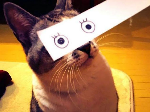 funny cartoon eyes for cats-1