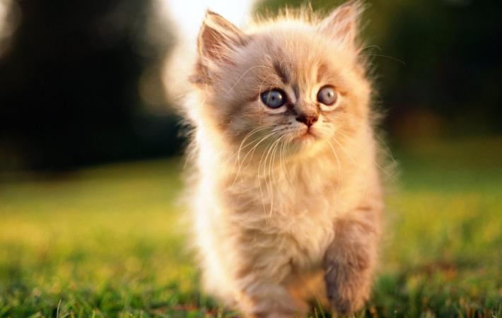 4700 Koleksi Gambar Hewan Kucing Dan Penjelasannya Terbaik