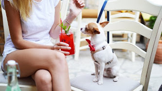 Miss, Fresh Drink and Cute Dog