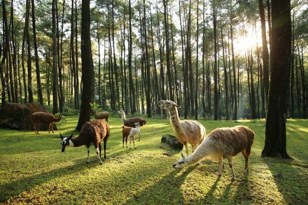 Taman Safari II Prigen Pasuruan