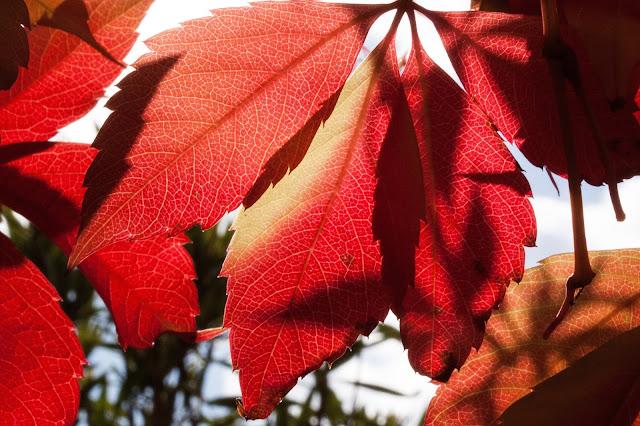 herfst, blad, bos, seizoen