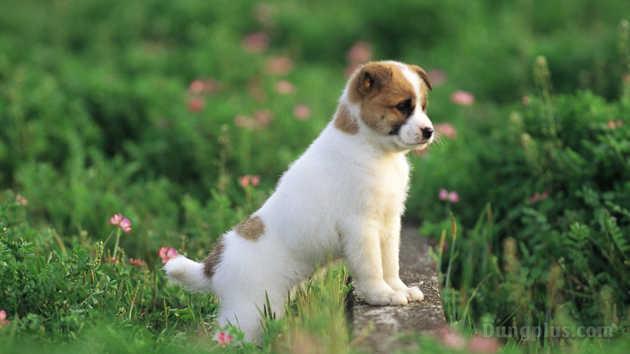 hình ảnh chó con dễ thương nhất 8