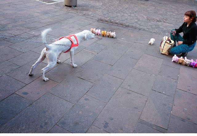Perro blanco chumbándole a uno de juguete.
