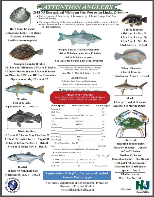 Nj fish and game crab license gamesworld for Fish and game licence