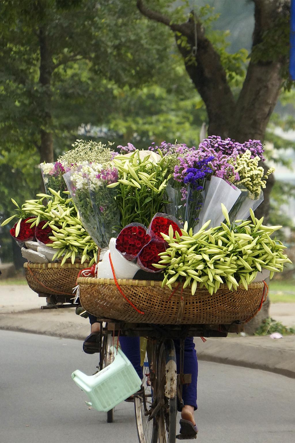 Du lịch tháng 4 Hà Nội cùng mùa hoa loa kèn