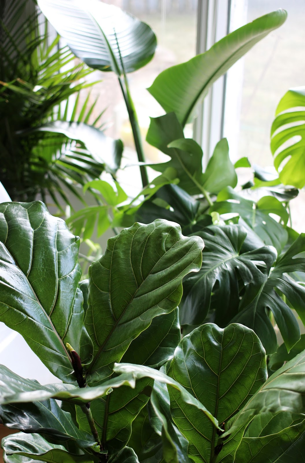 image of indoor plants