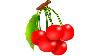 pink cherry clipart