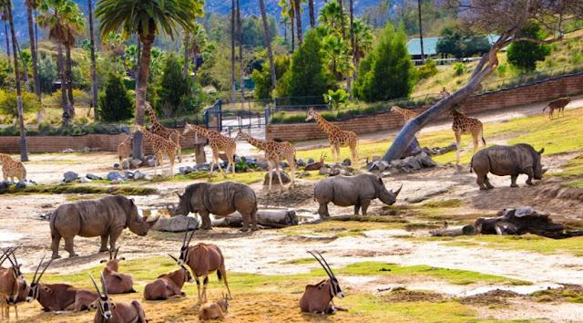 Zoo Safari Park em San Diego