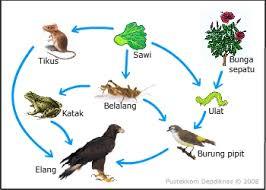 Faktor-Faktor Penghalang Persebaran Makhluk Hidup Di Muka Bumi