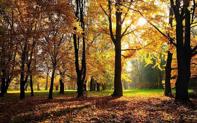 Bomen in het park tijdens de herfst