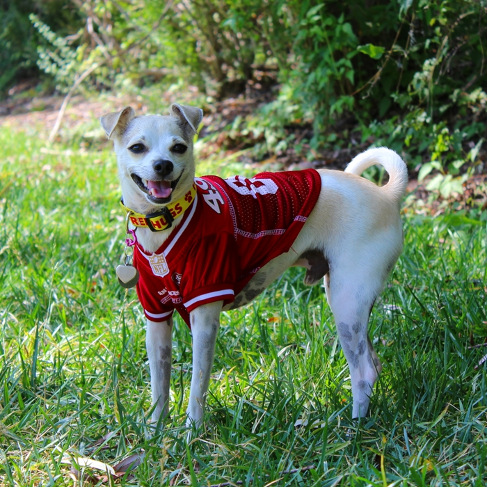 San Francisco 49ers Dog Jersey