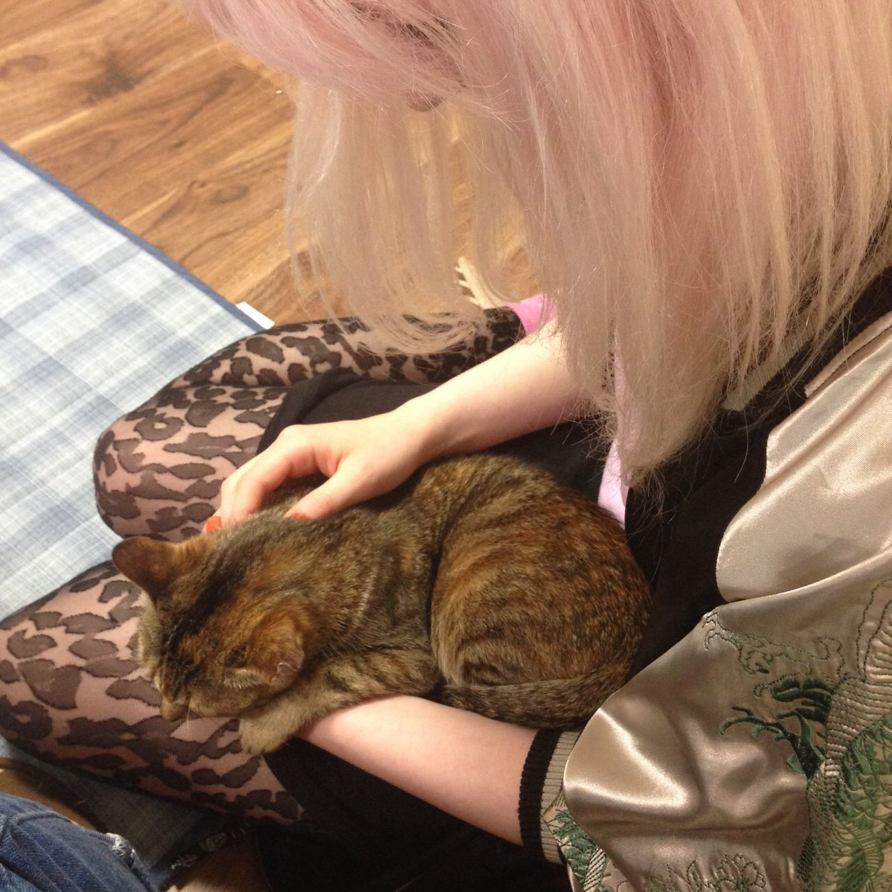 Cat Cafe in Ibaraki, Japan