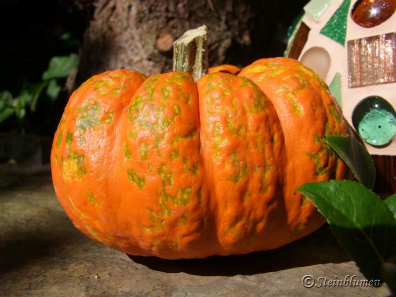 Herbstdeko mit Kürbissen