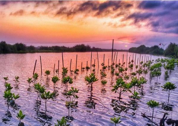 Keindahan lain Hutan Mangrove Pasir Mendit