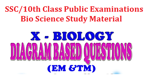 SSC/10th Bio Science Diagram based Important Material for Public Examination | SSC Biological Science Important Diagram questions | 10th class Public Examinations Bio-Science Important questions and Diagrams Download | Important SSC/10th Public Examinations March-2017 very useful to prepare for the said examinations ssc-10th-bio-science-diagram-based-important-study-material-download
