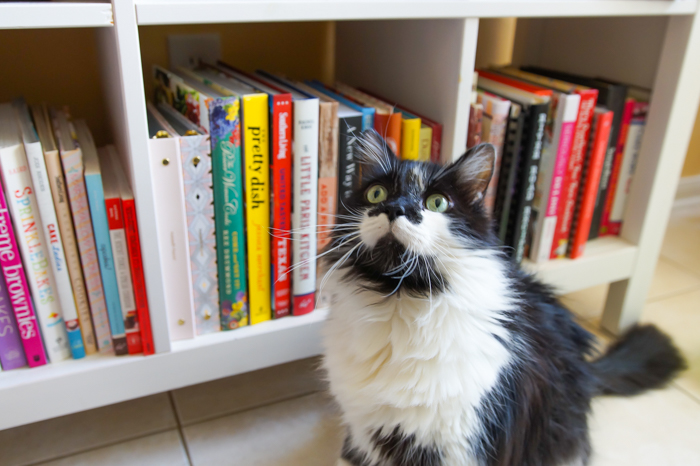 How to Organize Your Old Martha Stewart Everyday Food Magazines ♥ + Spike the cat