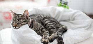 Kediler için Pat Yatak Yapımı