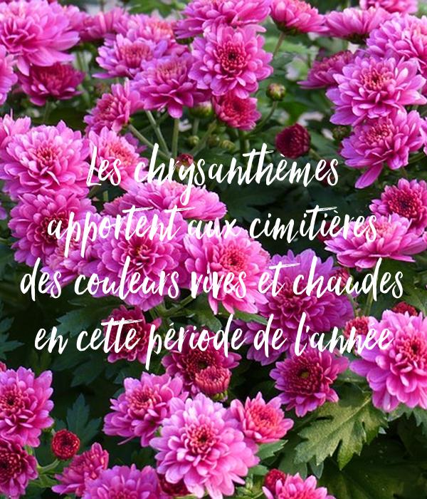 http://ticsenfle.blogspot.com.es/2012/11/chrysantheme-fleur-de-la-toussaint.html