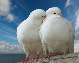 Rüyada kuş görmek