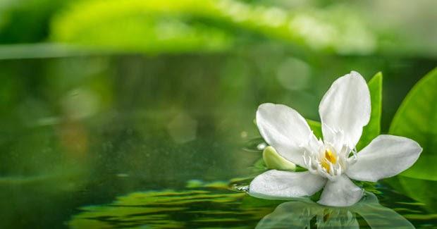 Camino al despertar la esencia del zen for Imagenes zen