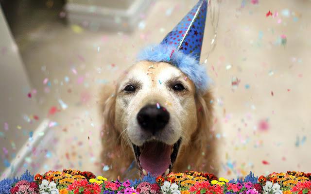 Foto van een jarige hond, met feesthoed, confetti en bloemen