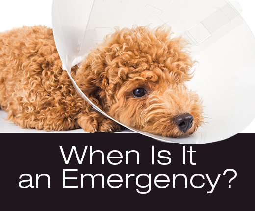 Dog Symptoms: When Is It an Emergency?