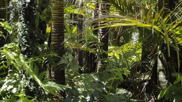 Image: Rainforest, by Rosina Kaiser on Pixabay