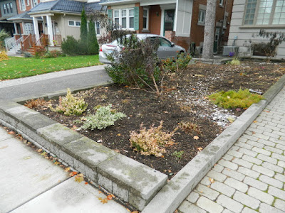 Fall Clean up Toronto Bedford Park Front Garden after by Paul Jung Gardening Services